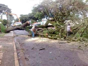 Funcionários da Secretaria de Serviços Urbanos tiveram muito trabalho para liberar a via que ficou interditada após a queda de uma árvore