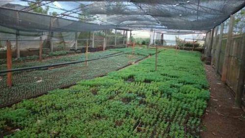 60 mil mudas de flores serão plantadas em Ubiratã