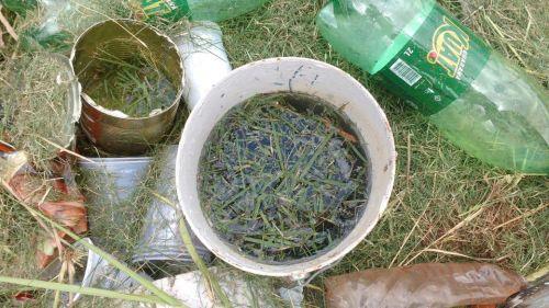 Limpeza em lotes evita proliferação do mosquito da dengue e outros insetos peçonhentos