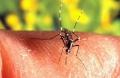 O combate ao mosquito da dengue deve ser feito todos os dias