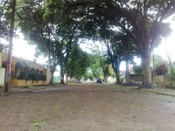 As ruas da cidade ficaram tomadas por folhas e em alguns lugares galhos caíram das árvores