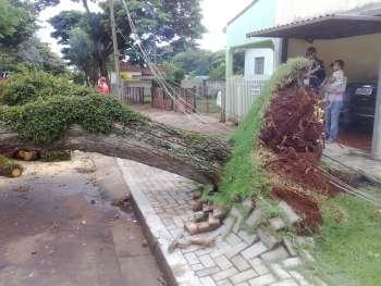 O vento forte arrancou uma árvore pela raiz; não ocorreu nenhum destelhamento