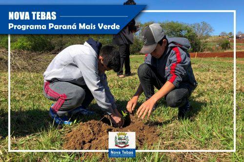 Dia D do Programa Paraná Mais Verde