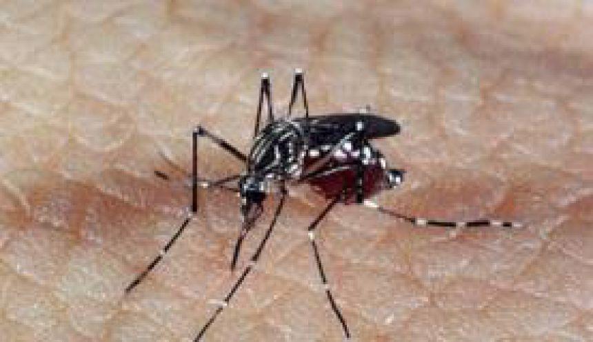 São João do Ivaí planeja ações de mobilização contra a dengue