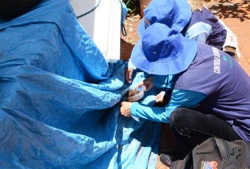5º LIRAa apresenta baixo risco de epidemia de dengue em Assis