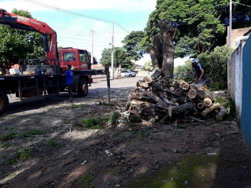 Após avaliação árvores estão passando por poda ou corte em Araruna. Fotografia: Rivaldo de Mattos.