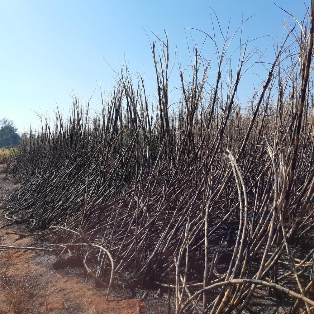 Fiscalização notifica setor canavieiro para evitar queimadas