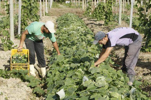 Empregos na agropecuária têm o maior saldo dos últimos cinco anos