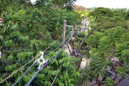 Programa da Copel melhora convivência entre árvores e redes de energia