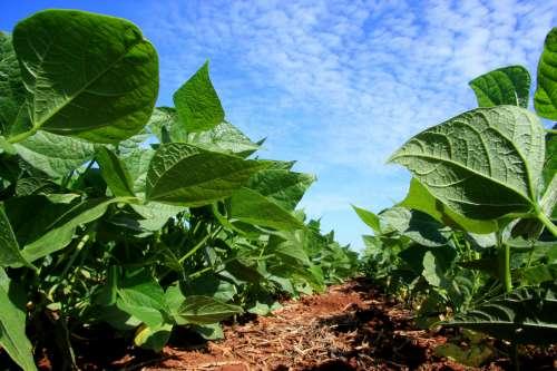 Paraná vai aumentar área de plantio na safra de verão 2013/14