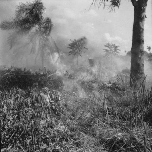 Início do desbravamento do hoje município de Rio Bom, em 1960