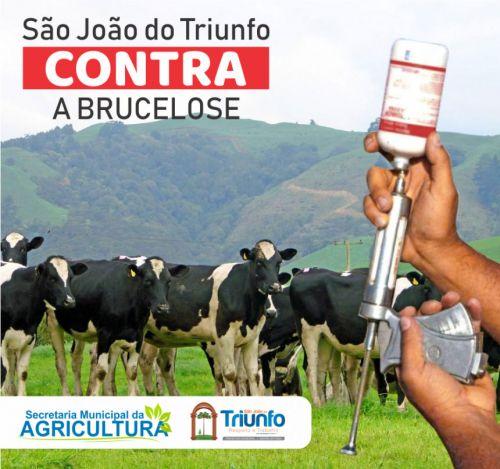 Campanha Brucelose