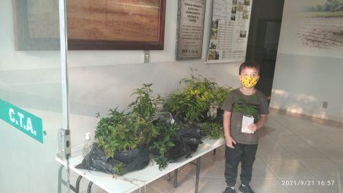Distribuição de Árvores Nativas