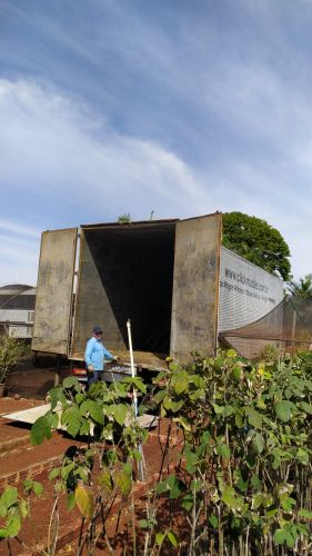 Prefeitura recebe doação de mudas de árvores