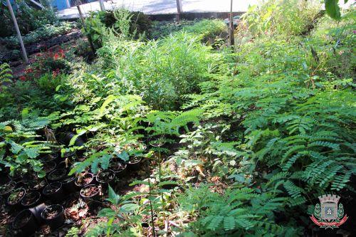 Mandaguaçu utiliza bioinseticida para combater infestação de borrachudos e pernilongos