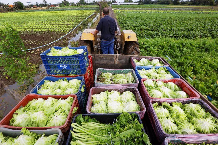 Agricultores Familiares podem se cadastrar para vender alimentos a programa assistencial