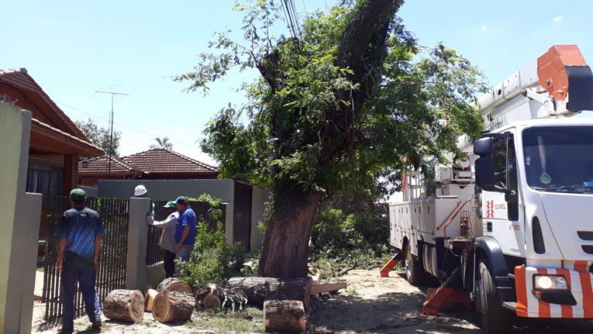 Prefeitura explica o motivo da retirada da árvore