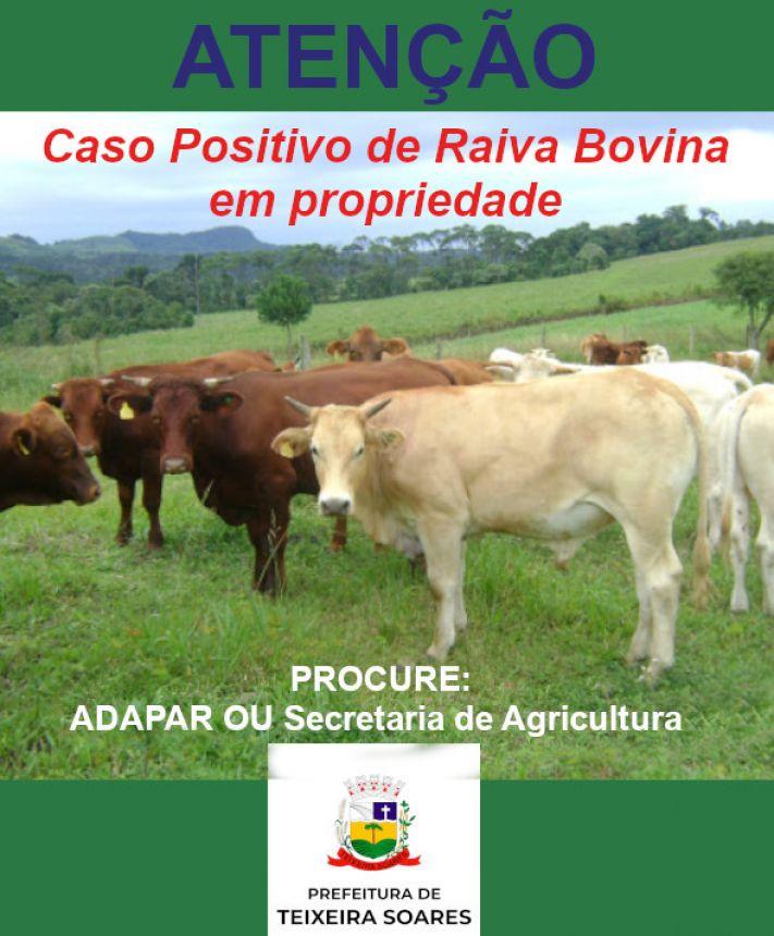 Sintomas de Raiva Bolvina