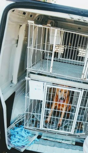 Prefeitura inicia programa de castração de animais abandonados