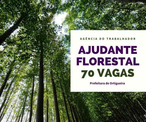 Agência do Trabalhador: 70 vagas para ajudante florestal
