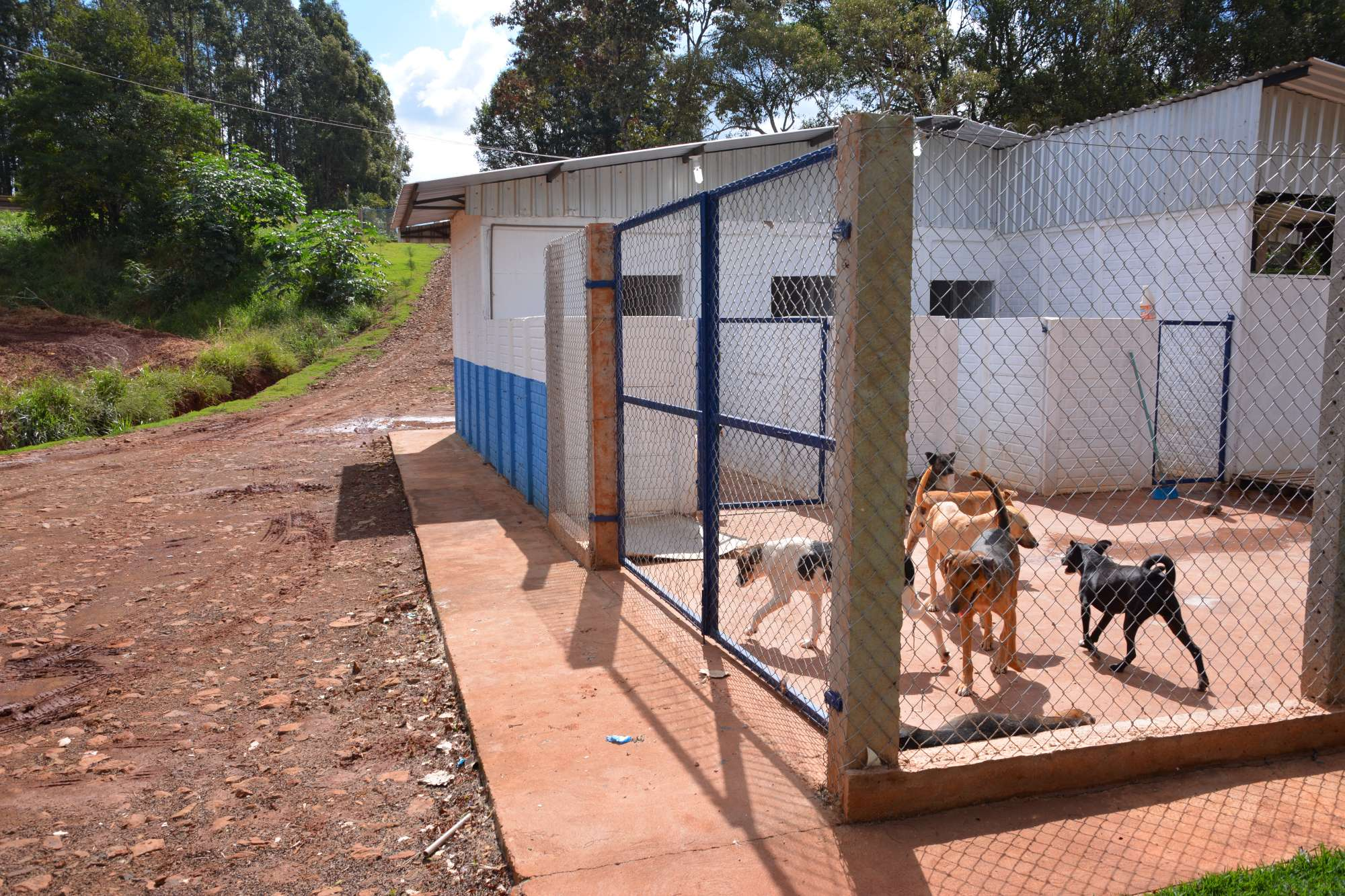 PROGRAMA MUNICIPAL DE CASTRAÇÃO E MICROCHIPAGEM  DE CÃES E GATOS JÁ ATENDEU APROXIMADAMENTE 950 ANIMAIS EM MAMBORÊ