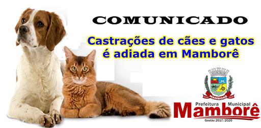 Castrações de cães e gatos é adiada em Mamborê, por motivos de força maior