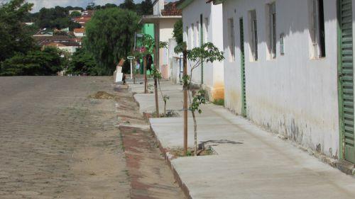 Replantio de àrvores