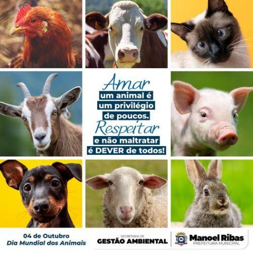 Hoje, dia 04 de Outubro é comemorado o dia dos animais.