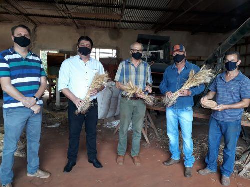 Apresentação de Novas cultivares de Trigo