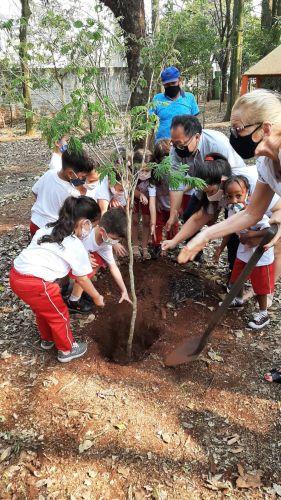 Cafelândia realiza plantio de mudas de árvores para marcar o Dia da Árvore nesta terça-feira (21 de setembro)