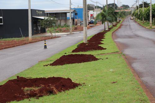 Secretaria de Agricultura e Meio Ambiente inicia o plantio de palmeiras no Contorno Norte