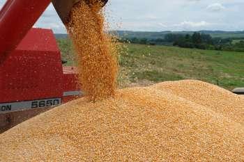 A colheita da safra de milho e soja deve começar nos próximos dias