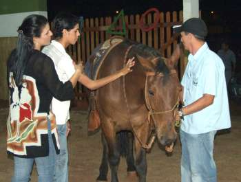 Antes de montar, a pessoa é estimulada a manter um primeiro contato com o animal, para que dessa forma ela ganhe confiança e não tenha medo
