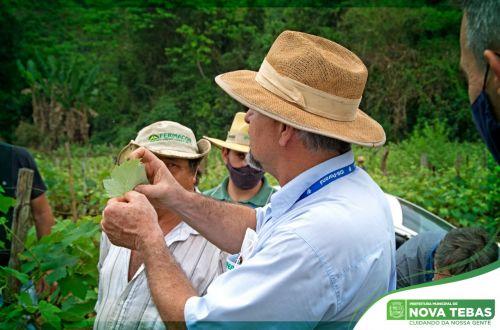 Técnicos e produtores de uva de Nova Tebas participam de reunião técnica com treino e visita