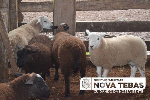 Curso de Produção de Ovinos