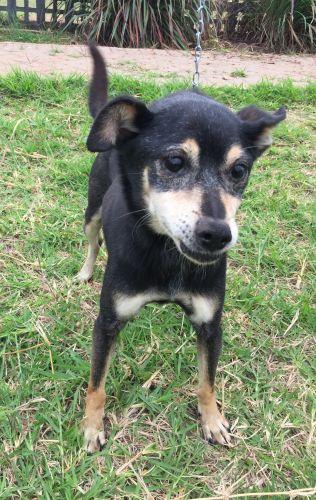 Centro de Bem Estar Animal disponibiliza cães para adoção